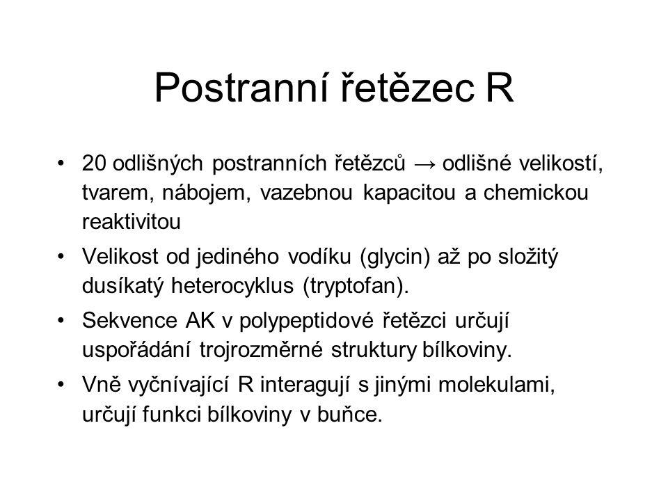 Postranní řetězec R 20 odlišných postranních řetězců → odlišné velikostí, tvarem, nábojem, vazebnou kapacitou a chemickou reaktivitou Velikost od jedi