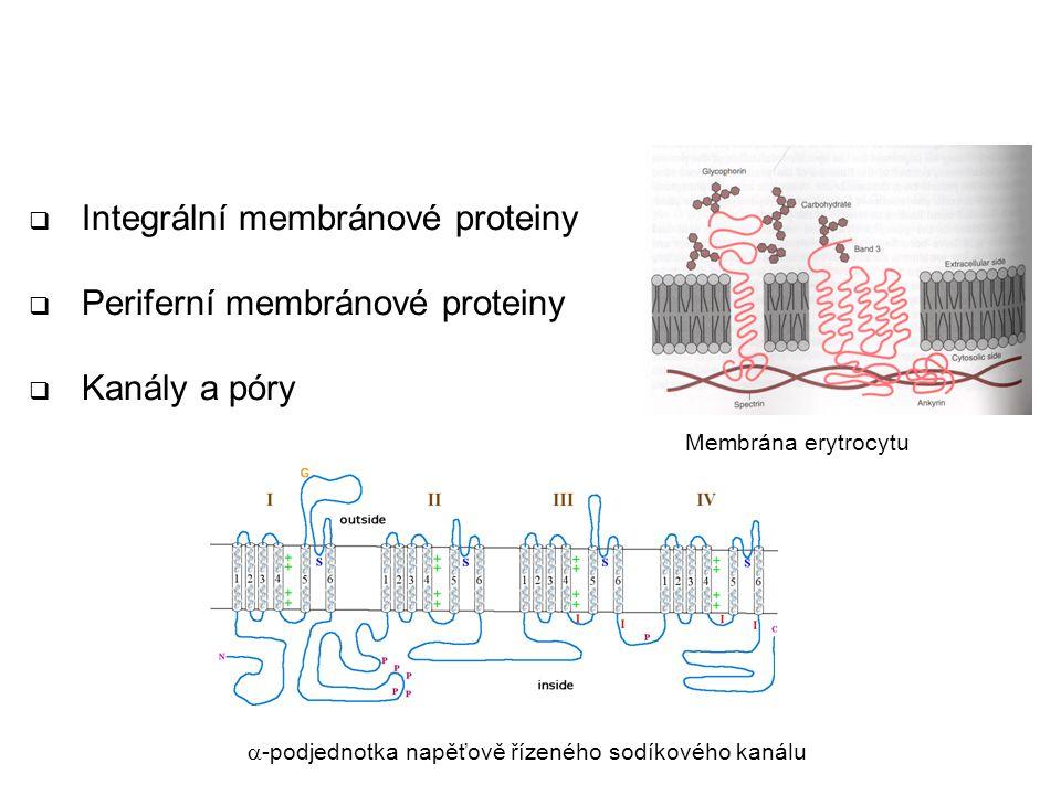 Proteiny biologických membrán  Integrální membránové proteiny  Periferní membránové proteiny  Kanály a póry Membrána erytrocytu  -podjednotka napě