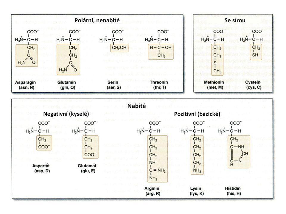 Desmosin příčná vazba v elastinu, Ornitin a citrulin intermediáty biosyntézy argininu a močovinového cyklu Selenocystein označován jako 21 proteinogenní AK (glutathion peroxidasa, glycinreduktasa)