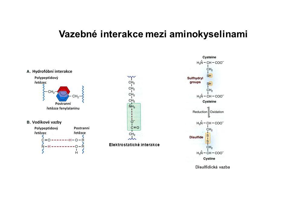 Peptidová vazba Dehydratační syntéza (kondenzační reakce)