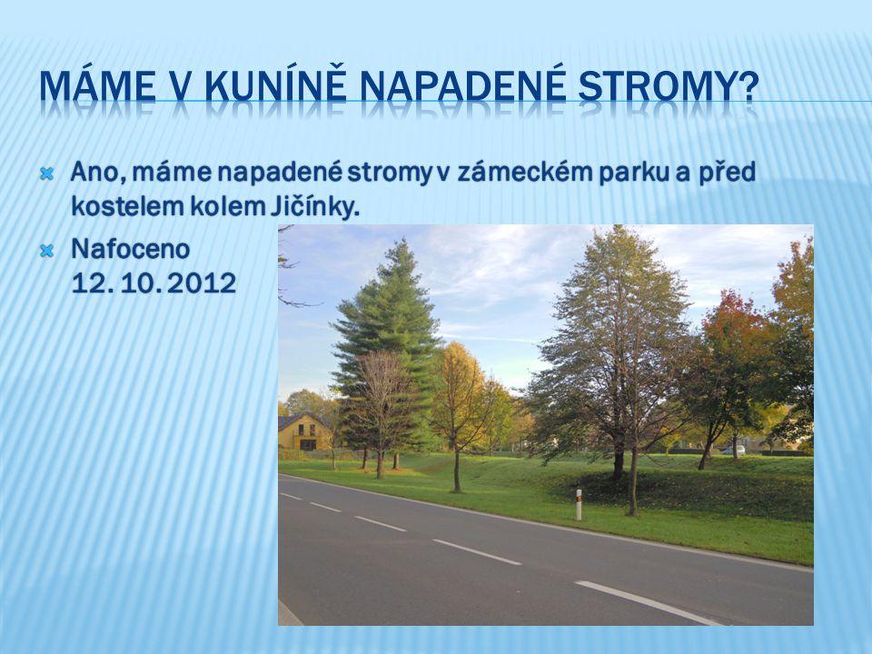  Ano, máme napadené stromy v zámeckém parku a před kostelem kolem Jičínky.  Nafoceno 12. 10. 2012
