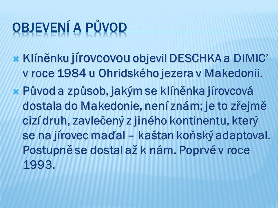  Klíněnku jírovcovou objevil DESCHKA a DIMIC' v roce 1984 u Ohridského jezera v Makedonii.  Původ a způsob, jakým se klíněnka jírovcová dostala do M