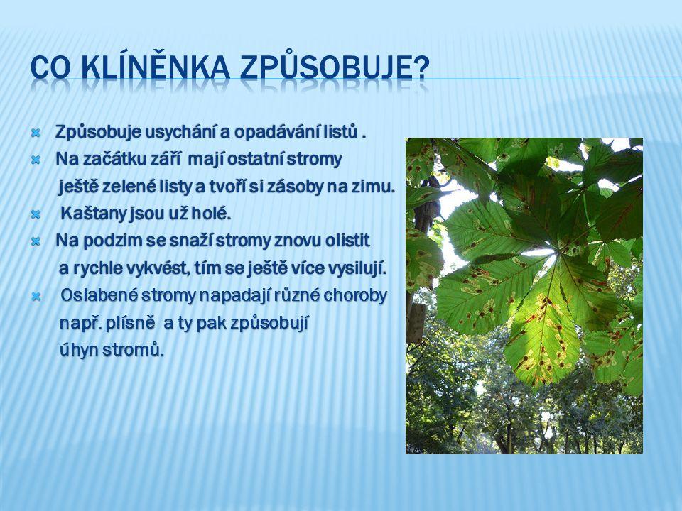  Způsobuje usychání a opadávání listů.  Na začátku září mají ostatní stromy ještě zelené listy a tvoří si zásoby na zimu. ještě zelené listy a tvoří