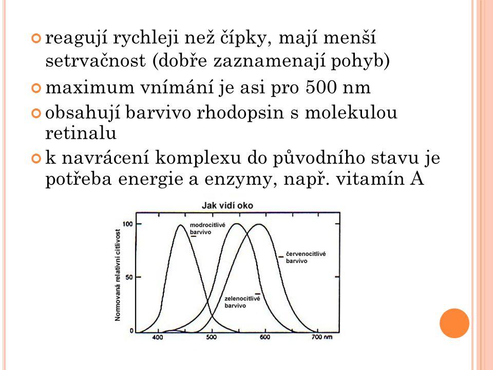 reagují rychleji než čípky, mají menší setrvačnost (dobře zaznamenají pohyb) maximum vnímání je asi pro 500 nm obsahují barvivo rhodopsin s molekulou