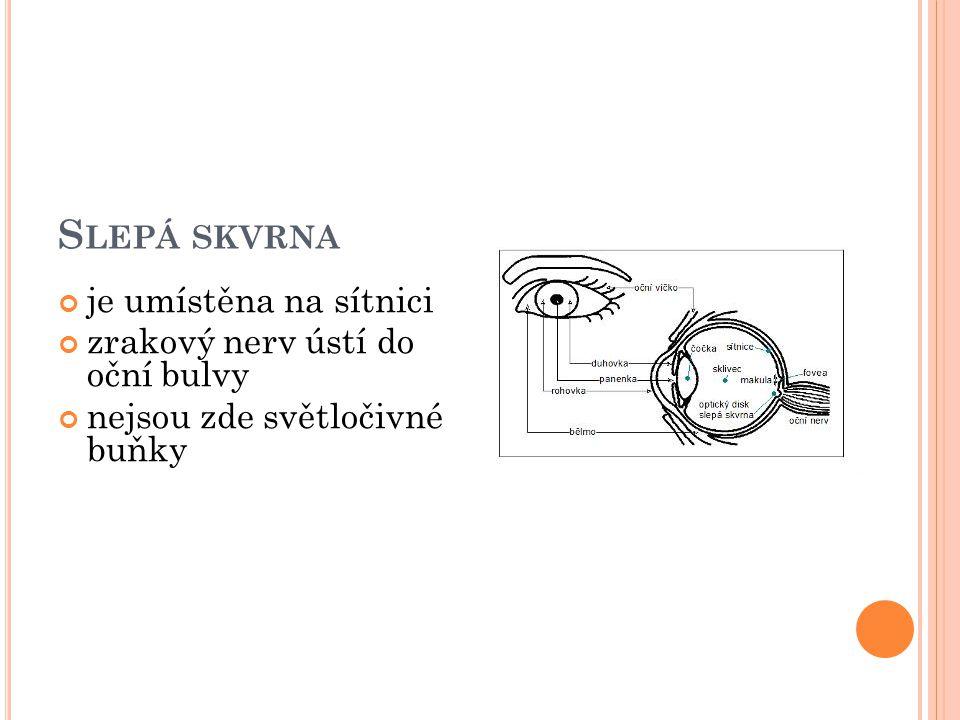 S LEPÁ SKVRNA je umístěna na sítnici zrakový nerv ústí do oční bulvy nejsou zde světločivné buňky