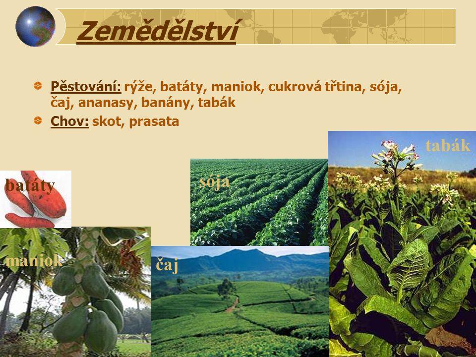Zemědělství Pěstování: rýže, batáty, maniok, cukrová třtina, sója, čaj, ananasy, banány, tabák Chov: skot, prasata batáty tabák maniok čaj sója