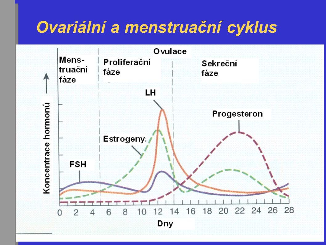 Ovariální a menstruační cyklus