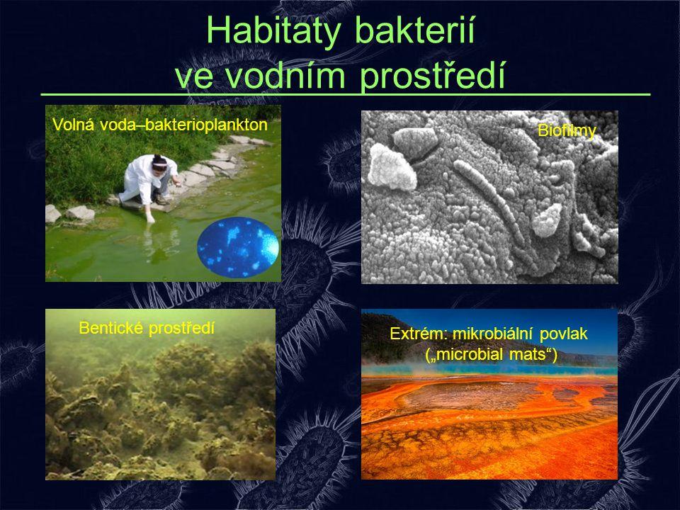 """Habitaty bakterií ve vodním prostředí Volná voda–bakterioplankton Extrém: mikrobiální povlak (""""microbial mats"""") Bentické prostředí Biofilmy"""