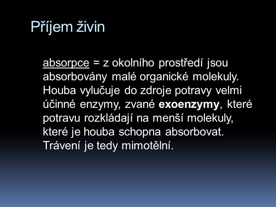 Příjem živin absorpce = z okolního prostředí jsou absorbovány malé organické molekuly. Houba vylučuje do zdroje potravy velmi účinné enzymy, zvané exo