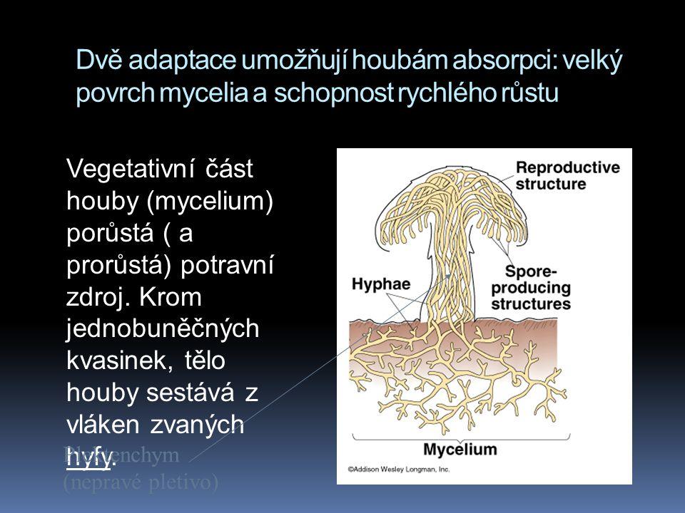 Dvě adaptace umožňují houbám absorpci: velký povrch mycelia a schopnost rychlého růstu Vegetativní část houby (mycelium) porůstá ( a prorůstá) potravn