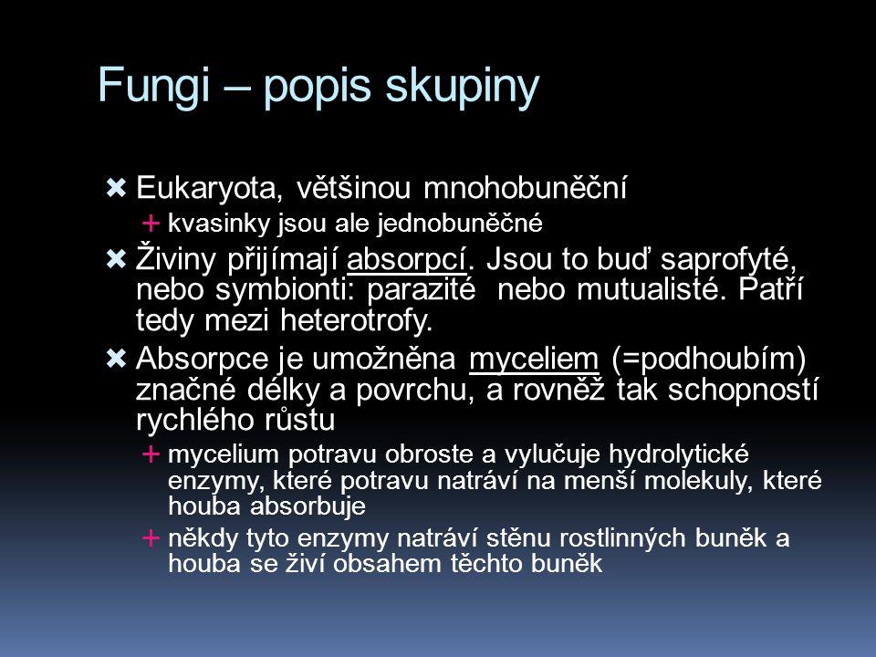 Fungi – popis skupiny  Eukaryota, většinou mnohobuněční  kvasinky jsou ale jednobuněčné  Živiny přijímají absorpcí. Jsou to buď saprofyté, nebo sym