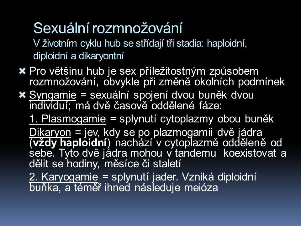 Sexuální rozmnožování V životním cyklu hub se střídají tři stadia: haploidní, diploidní a dikaryontní  Pro většinu hub je sex příležitostným způsobem