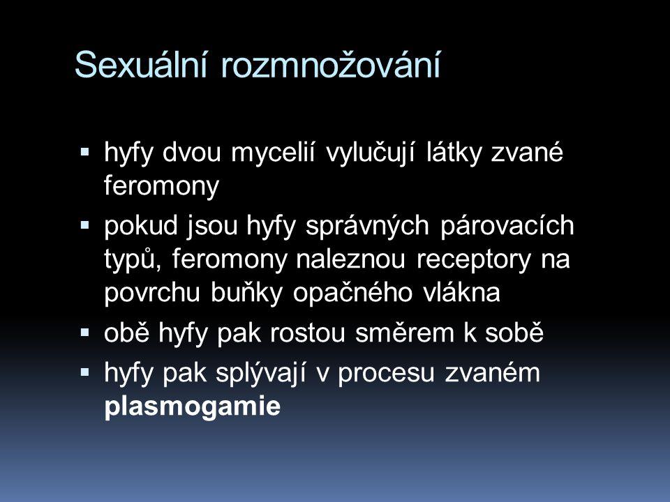 Sexuální rozmnožování  hyfy dvou mycelií vylučují látky zvané feromony  pokud jsou hyfy správných párovacích typů, feromony naleznou receptory na po