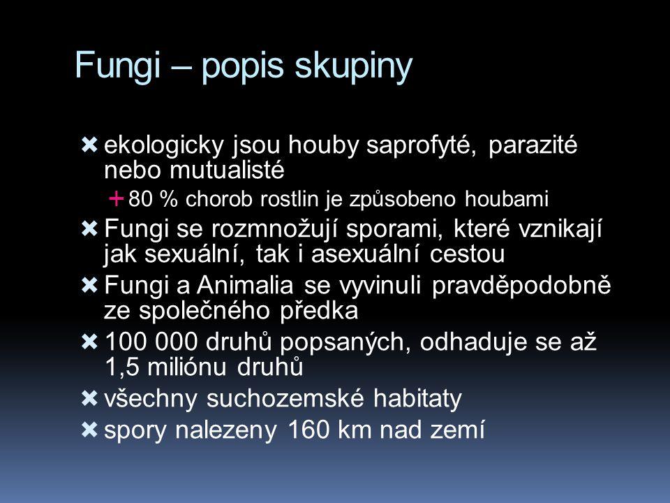 Fungi – popis skupiny  ekologicky jsou houby saprofyté, parazité nebo mutualisté  80 % chorob rostlin je způsobeno houbami  Fungi se rozmnožují spo