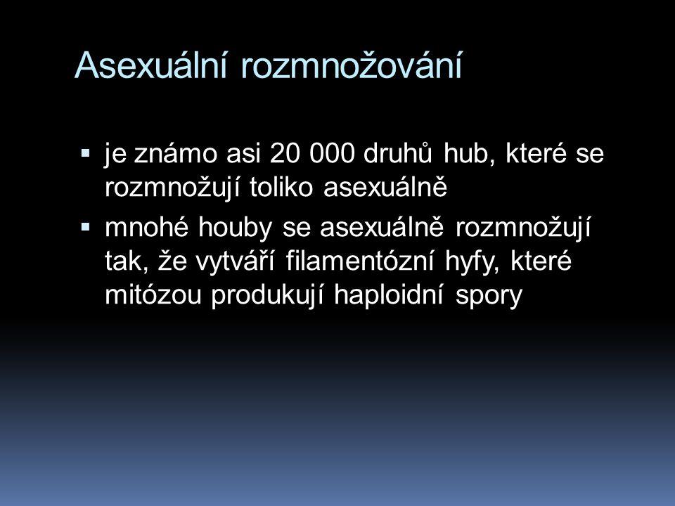 Asexuální rozmnožování  je známo asi 20 000 druhů hub, které se rozmnožují toliko asexuálně  mnohé houby se asexuálně rozmnožují tak, že vytváří fil