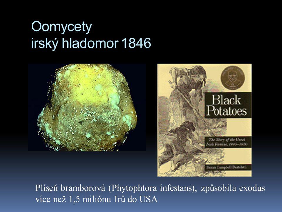 Oomycety irský hladomor 1846 Plíseň bramborová (Phytophtora infestans), způsobila exodus více než 1,5 miliónu Irů do USA