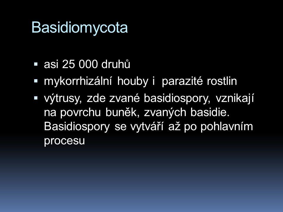 Basidiomycota  asi 25 000 druhů  mykorrhizální houby i parazité rostlin  výtrusy, zde zvané basidiospory, vznikají na povrchu buněk, zvaných basidi