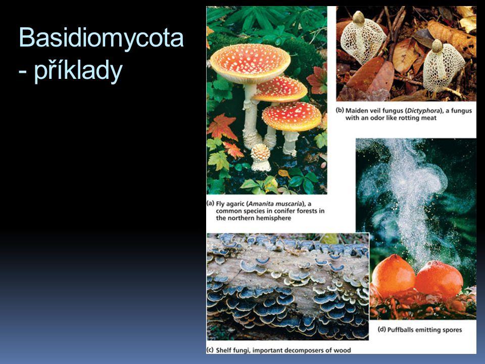 Basidiomycota - příklady
