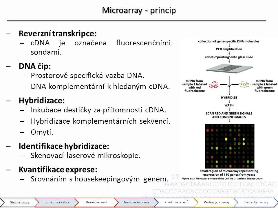 Microarray - princip ̶Reverzní transkripce: ̶cDNA je označena fluorescenčními sondami. ̶DNA čip: ̶Prostorově specifická vazba DNA. ̶DNA komplementární