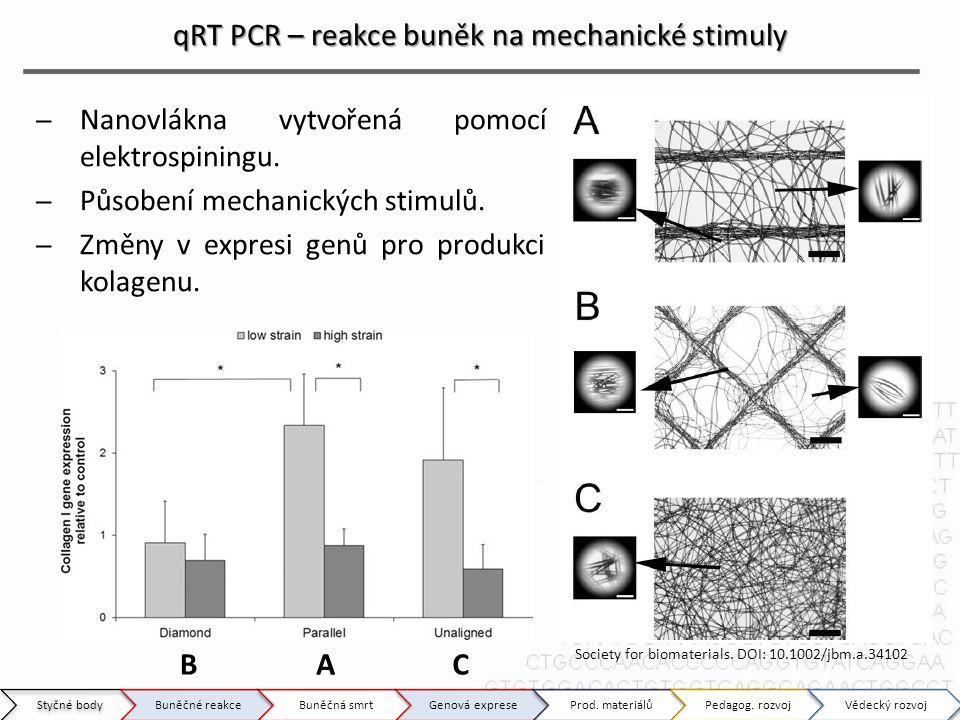 qRT PCR – reakce buněk na mechanické stimuly ̶Nanovlákna vytvořená pomocí elektrospiningu. ̶Působení mechanických stimulů. ̶Změny v expresi genů pro p