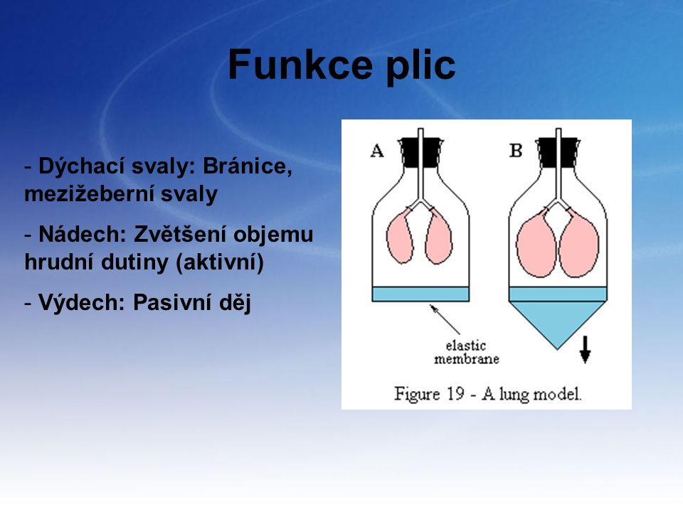 Funkce plic - Dýchací svaly: Bránice, mezižeberní svaly - Nádech: Zvětšení objemu hrudní dutiny (aktivní) - Výdech: Pasivní děj