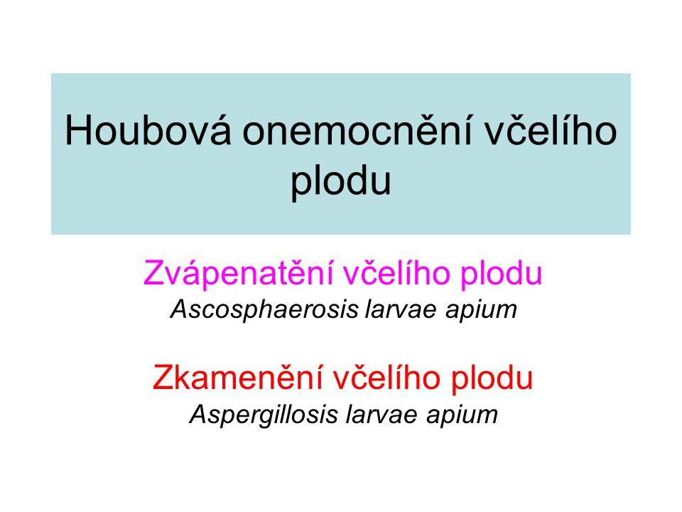 Zvápenatění včelího plodu Houbové onemocnění včelího plodu - v Evropě známé od 1.poloviny 20.