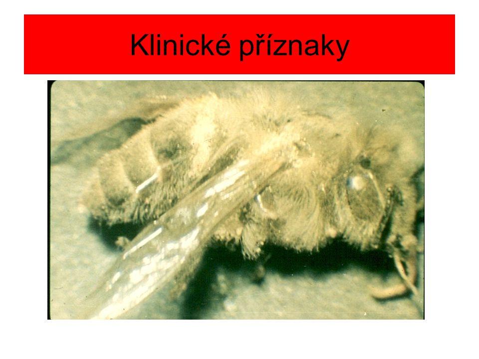 Opatření Jako u zvápenatění včelího plodu Uhynulé včely spálit Úly vyškrabat a vypálit až do hněda Tlumit varroázu Při práci – pozor na vdechování spór Chovat silná včelstva