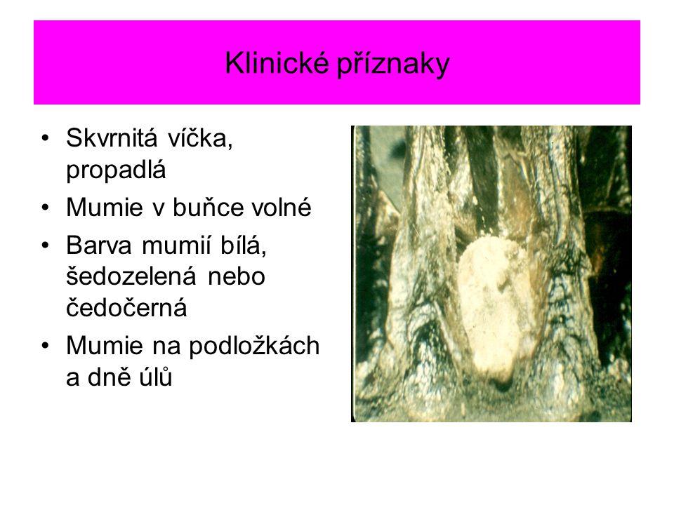 Klinické příznaky Skvrnitá víčka, propadlá Mumie v buňce volné Barva mumií bílá, šedozelená nebo čedočerná Mumie na podložkách a dně úlů