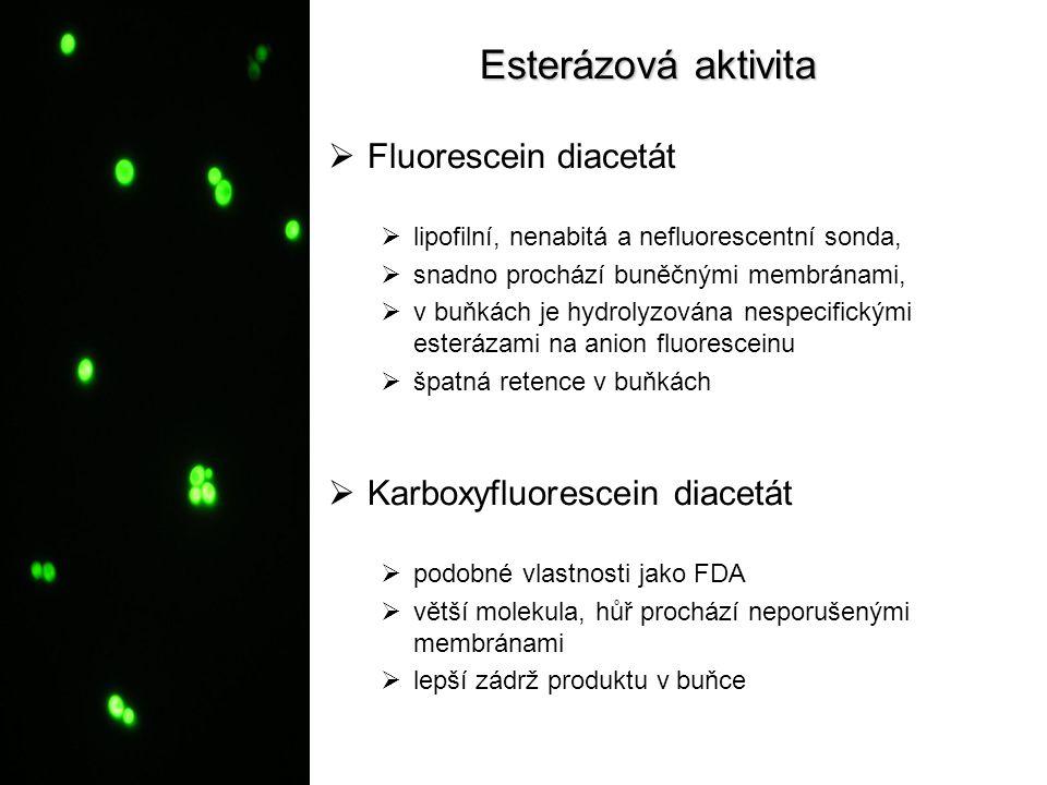 Esterázová aktivita  Fluorescein diacetát  lipofilní, nenabitá a nefluorescentní sonda,  snadno prochází buněčnými membránami,  v buňkách je hydro