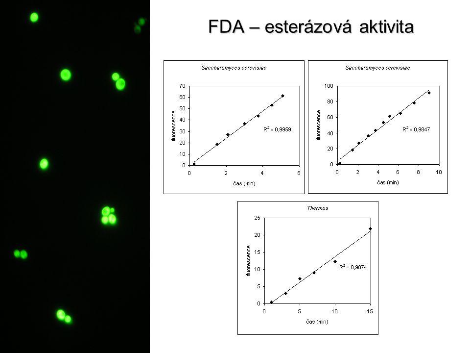 FDA – esterázová aktivita