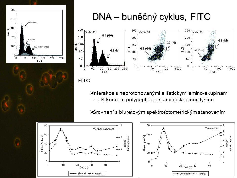 DNA – buněčný cyklus, FITC FITC  interakce s neprotonovanými alifatickými amino-skupinami → s N-koncem polypeptidu a ε-aminoskupinou lysinu  Srovnán
