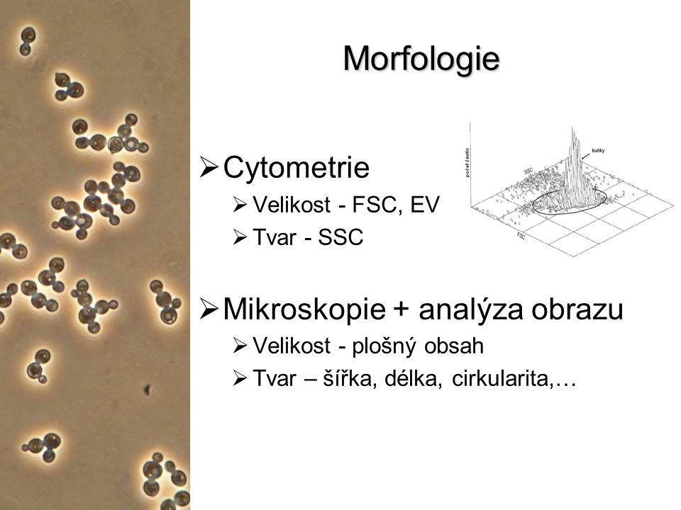Morfologie  Cytometrie  Velikost - FSC, EV  Tvar - SSC  Mikroskopie + analýza obrazu  Velikost - plošný obsah  Tvar – šířka, délka, cirkularita,