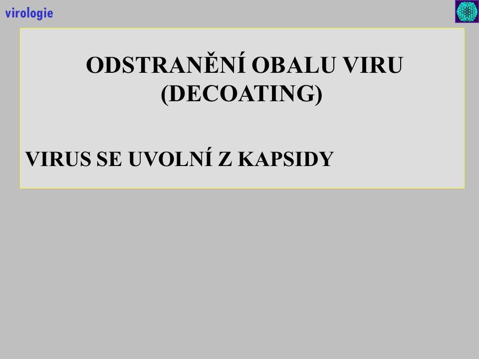 ODSTRANĚNÍ OBALU VIRU (DECOATING) VIRUS SE UVOLNÍ Z KAPSIDY virologie