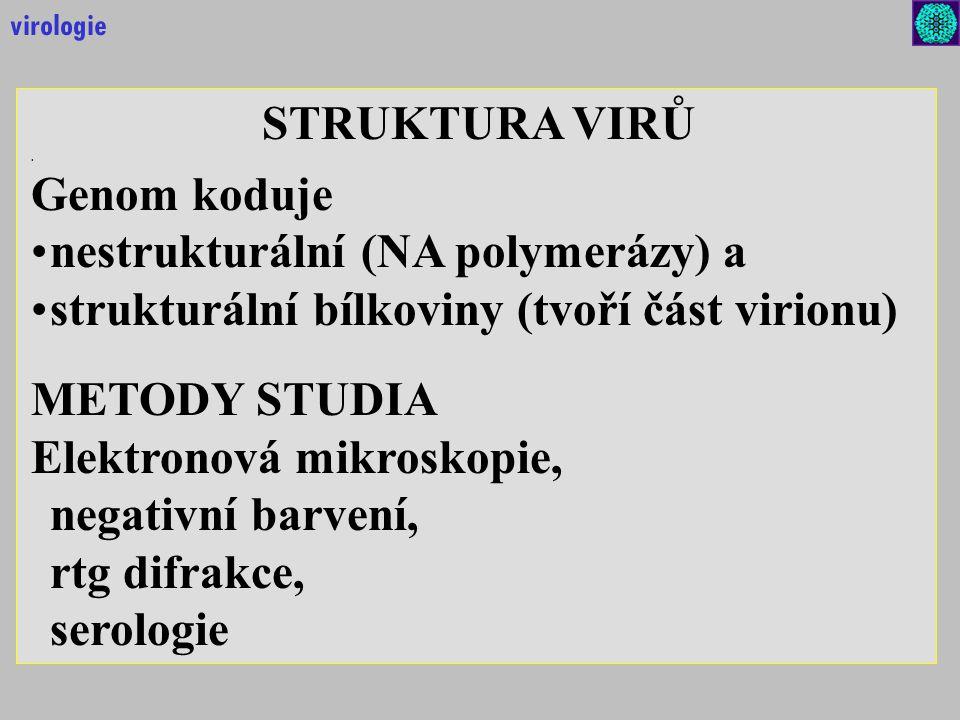 STRUKTURA VIRŮ. Genom koduje nestrukturální (NA polymerázy) a strukturální bílkoviny (tvoří část virionu) METODY STUDIA Elektronová mikroskopie, negat
