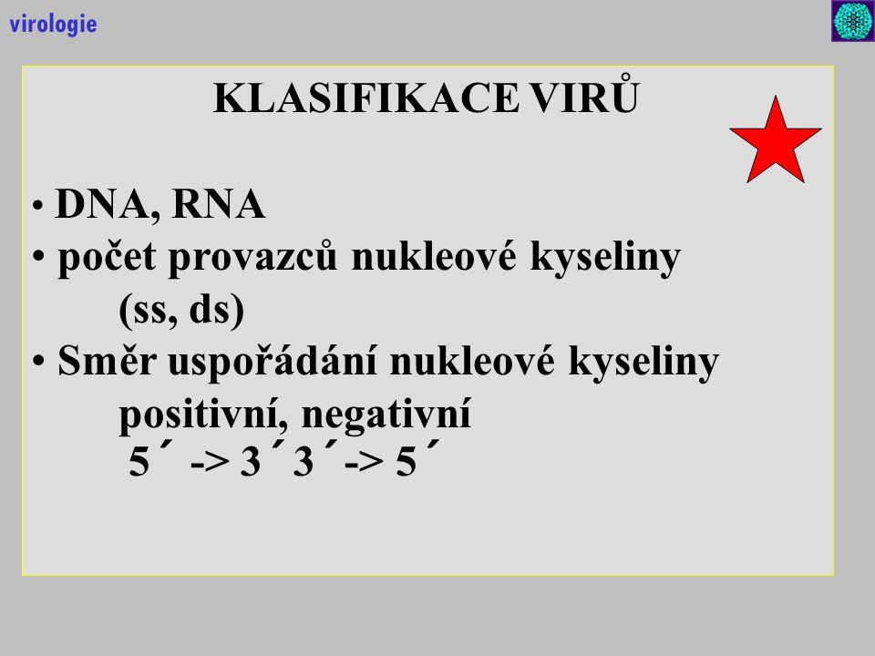 KLASIFIKACE VIRŮ DNA, RNA počet provazců nukleové kyseliny (ss, ds) Směr uspořádání nukleové kyseliny positivní, negativní 5´ -> 3´3´-> 5´ virologie
