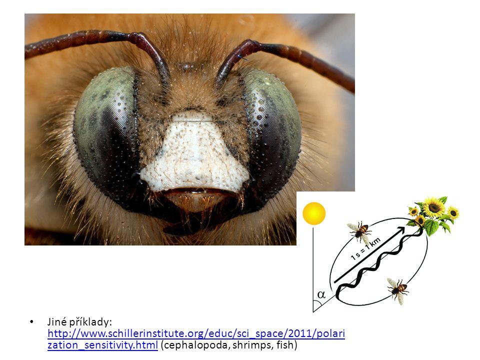 Jiné příklady: http://www.schillerinstitute.org/educ/sci_space/2011/polari zation_sensitivity.html (cephalopoda, shrimps, fish) http://www.schillerins