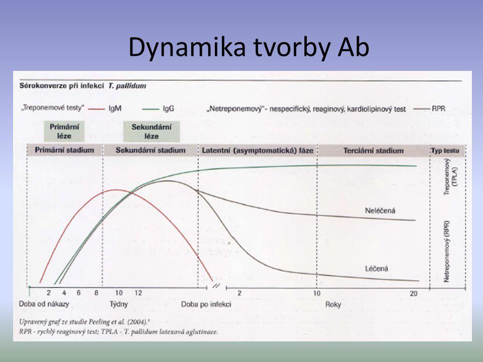 Dynamika tvorby Ab