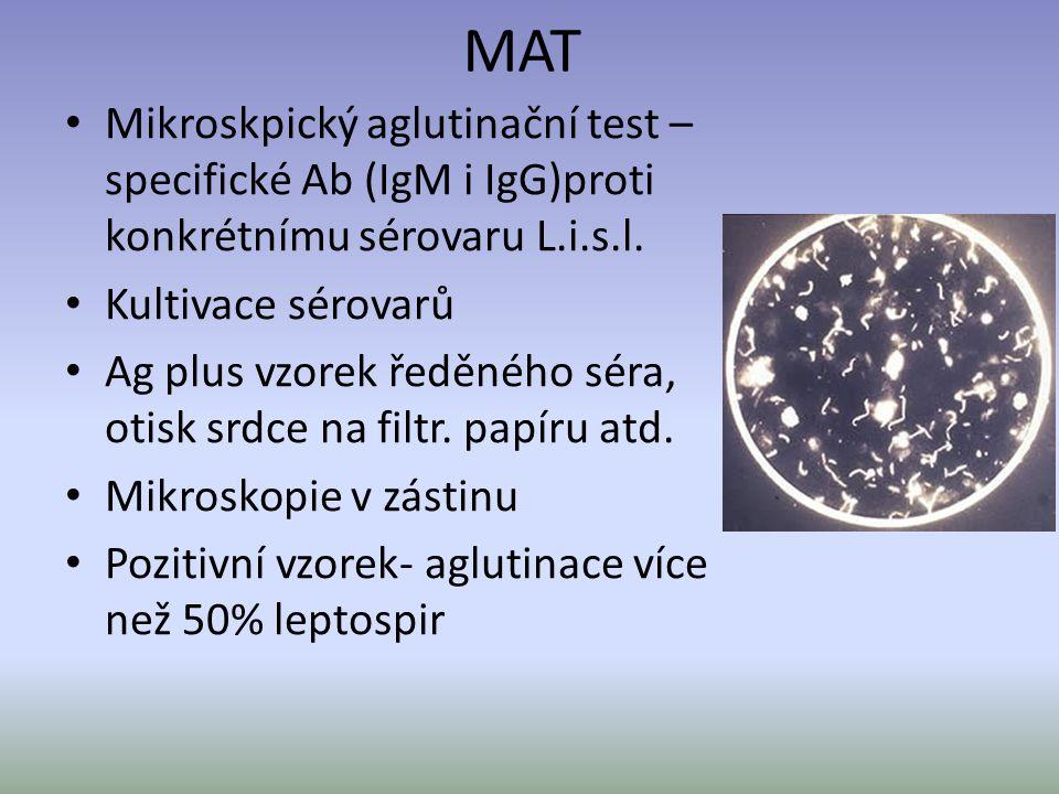 MAT Mikroskpický aglutinační test – specifické Ab (IgM i IgG)proti konkrétnímu sérovaru L.i.s.l. Kultivace sérovarů Ag plus vzorek ředěného séra, otis