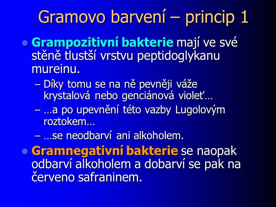 Gramovo barvení – princip 1 Grampozitivní bakterie mají ve své stěně tlustší vrstvu peptidoglykanu mureinu. Grampozitivní bakterie mají ve své stěně t