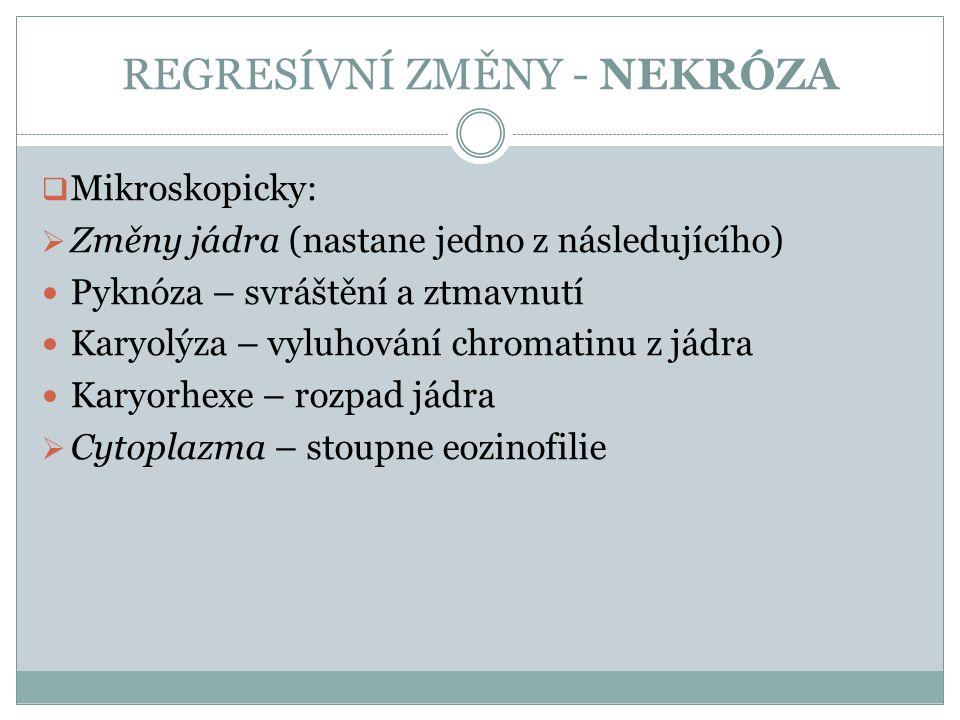 REGRESÍVNÍ ZMĚNY - NEKRÓZA  Mikroskopicky:  Změny jádra (nastane jedno z následujícího) Pyknóza – svráštění a ztmavnutí Karyolýza – vyluhování chrom