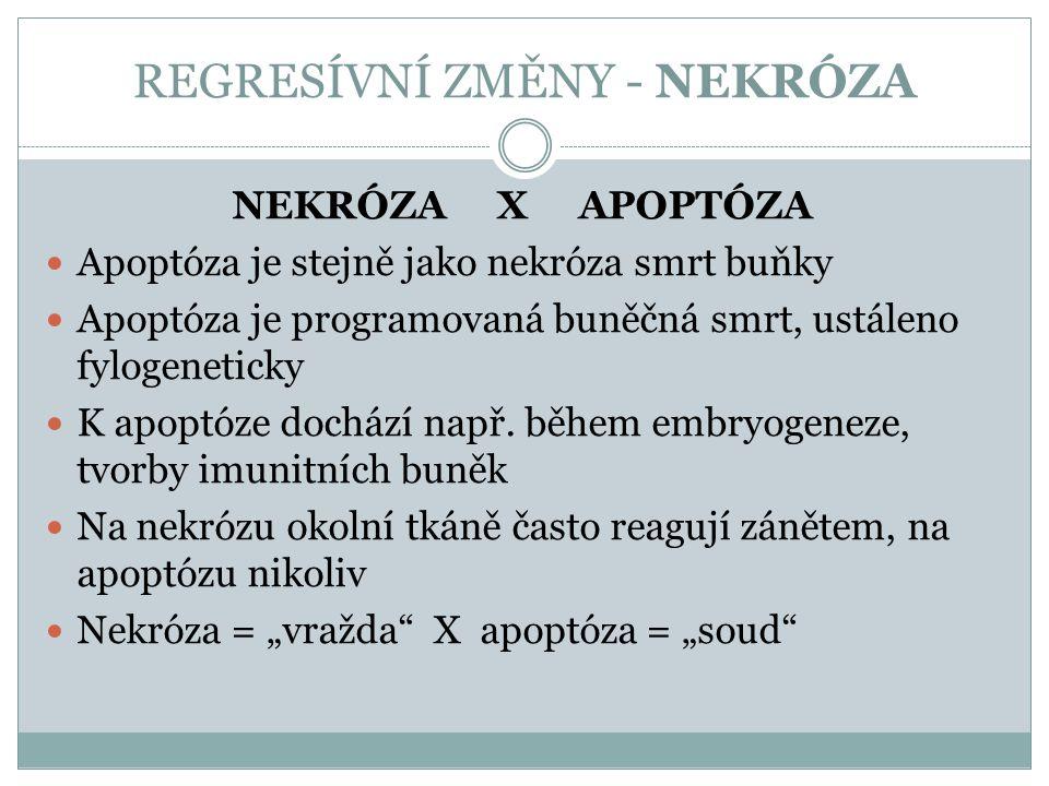 REGRESÍVNÍ ZMĚNY - NEKRÓZA NEKRÓZA X APOPTÓZA Apoptóza je stejně jako nekróza smrt buňky Apoptóza je programovaná buněčná smrt, ustáleno fylogeneticky