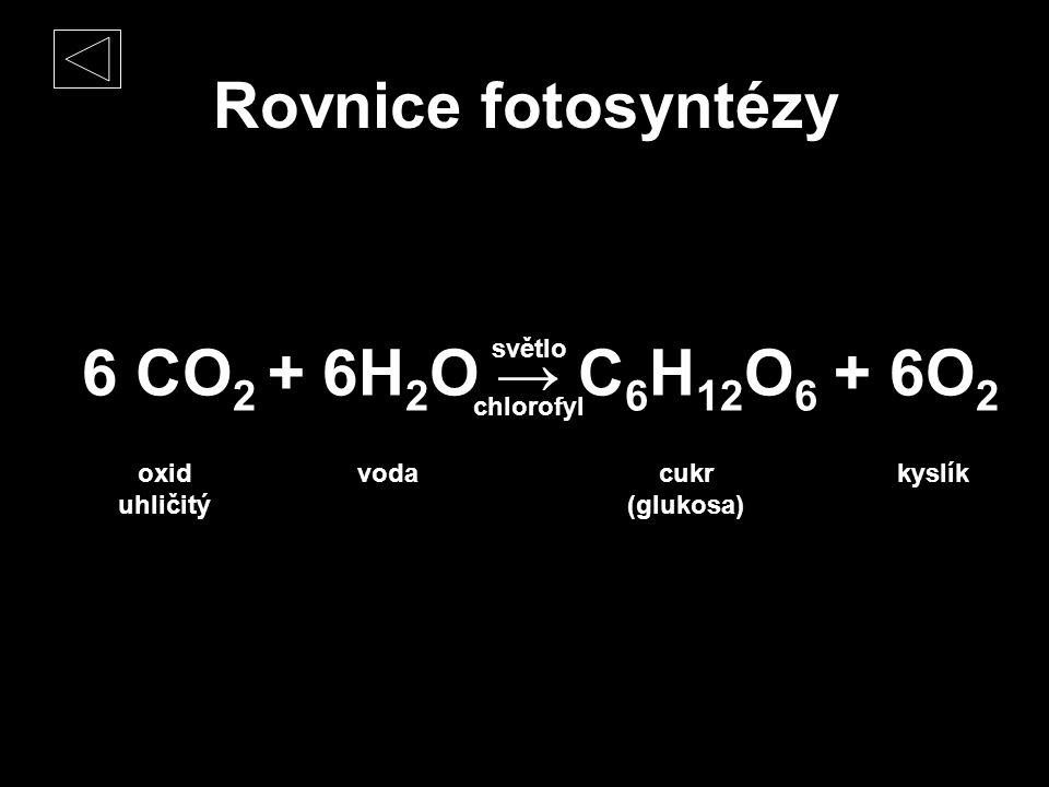 Rovnice fotosyntézy 6 CO 2 + 6H 2 O → C 6 H 12 O 6 + 6O 2 světlo chlorofyl oxid uhličitý vodacukr (glukosa) kyslík