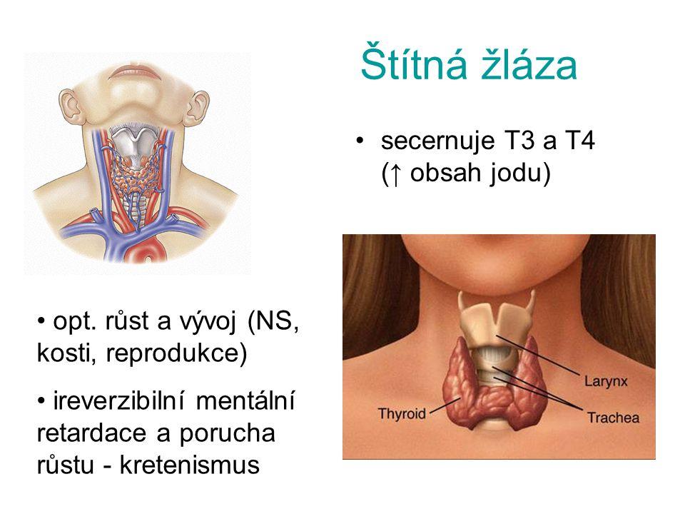 Štítná žláza secernuje T3 a T4 (↑ obsah jodu) opt. růst a vývoj (NS, kosti, reprodukce) ireverzibilní mentální retardace a porucha růstu - kretenismus