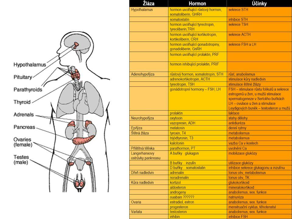 Perorální antidiabetika 1.deriváty sulfonylmočoviny ↑ uvolňování inzulínu z B buněk pankreatu, snižují koncentraci glukagonu a ↑ vazbu inzulínu na tkáňové receptory 1.generace – tolbutamid – před jídlem a spánkem, starší pacienti chlorpropamid – 1x ráno 2.