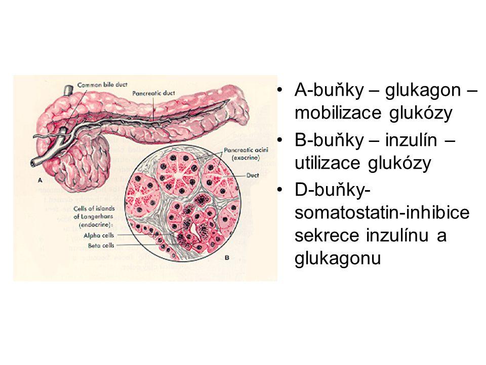 A-buňky – glukagon – mobilizace glukózy B-buňky – inzulín – utilizace glukózy D-buňky- somatostatin-inhibice sekrece inzulínu a glukagonu