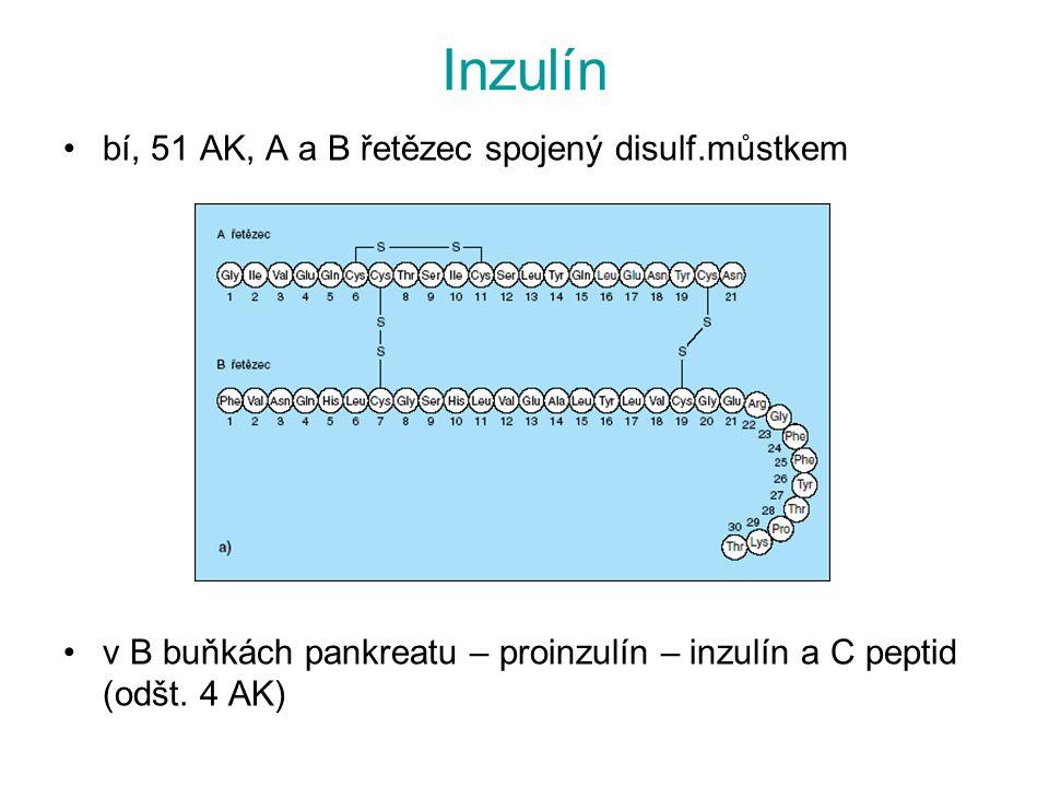 Inzulín bí, 51 AK, A a B řetězec spojený disulf.můstkem v B buňkách pankreatu – proinzulín – inzulín a C peptid (odšt. 4 AK)