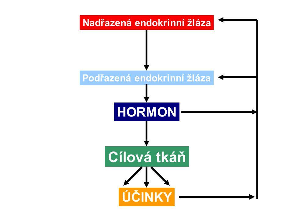 Štítná žláza secernuje T3 a T4 (↑ obsah jodu) opt.