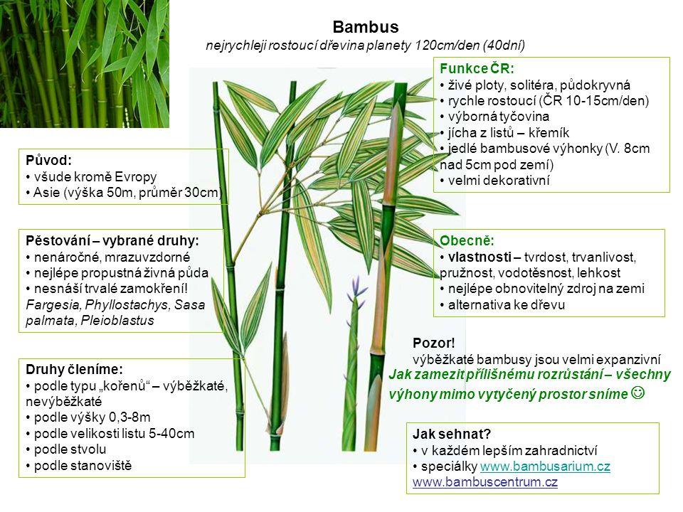 Bambus nejrychleji rostoucí dřevina planety 120cm/den (40dní) Původ: všude kromě Evropy Asie (výška 50m, průměr 30cm) Pěstování – vybrané druhy: nenár