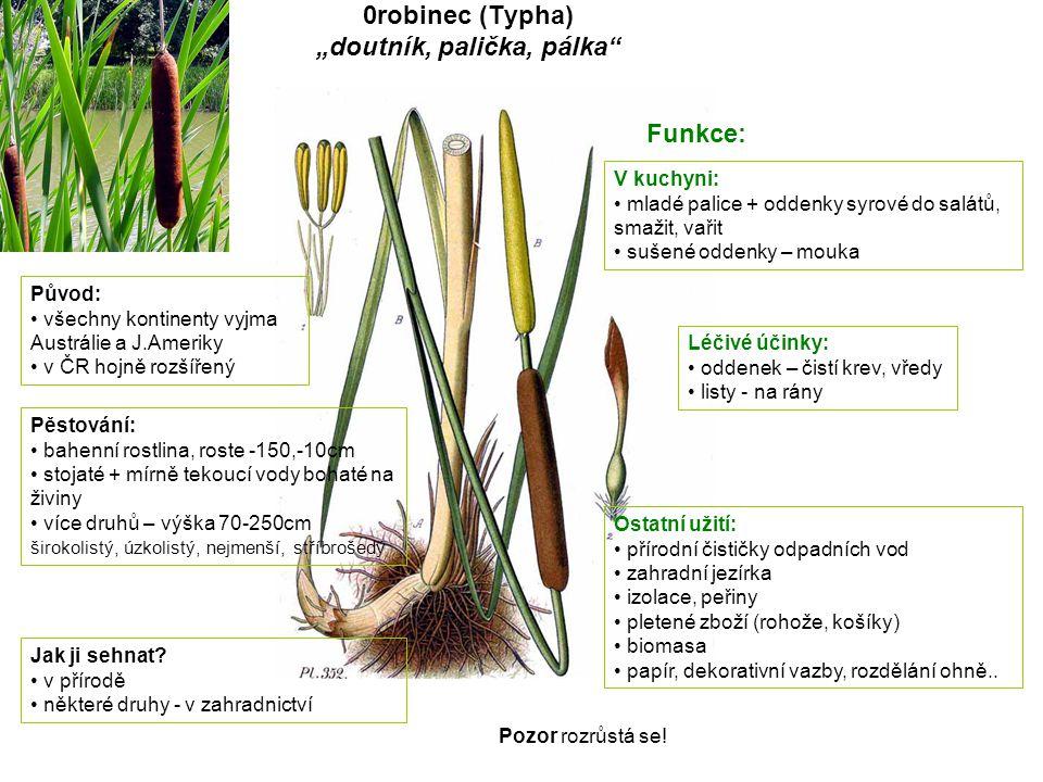Čechřice vonná (Myrrhis odorata) Původ: Evropa-Kavkaz, podhůří Skandinávie dříve pěstovaná v ČR Pěstování: nenáročná, mrazuvzdorná až 150 cm vysoká nejlépe vlhká, živná půda množí se semeny, dělením Jak ji sehnat.