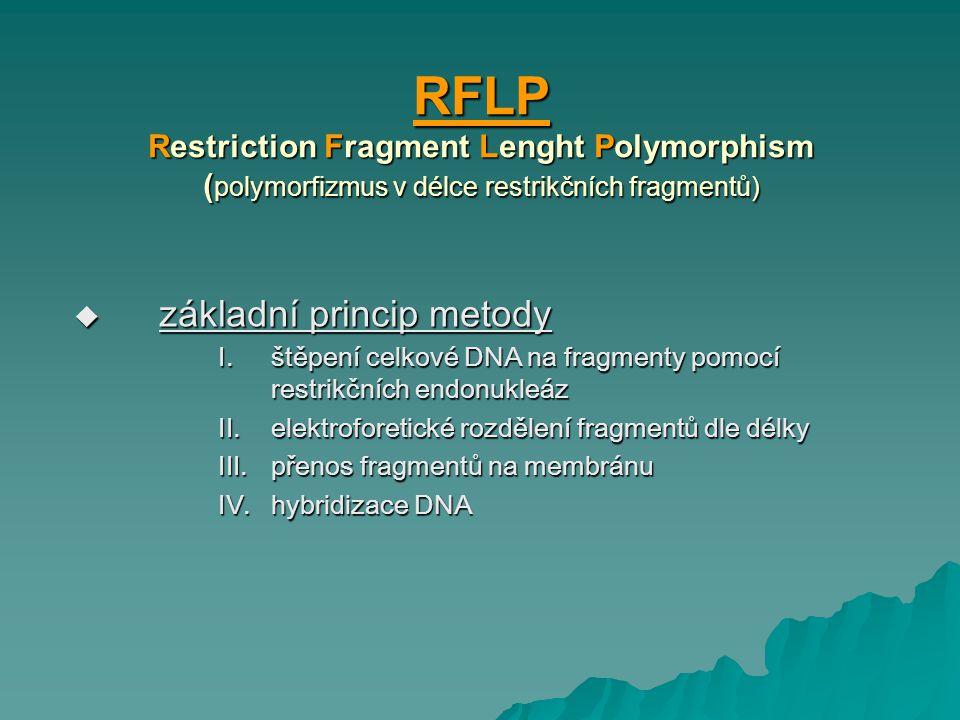 RFLP Restriction Fragment Lenght Polymorphism ( polymorfizmus v délce restrikčních fragmentů)  základní princip metody I.štěpení celkové DNA na fragm